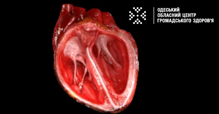 Три питання до кардіолога у Всесвітній день серця